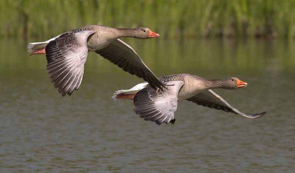 Fly Like the Birds
